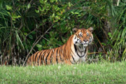 Sundarban Forest & Tiger Den Tour