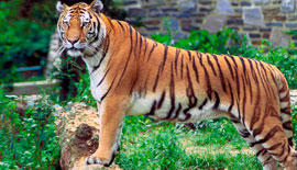 Sundarban Forest and Tiger Den Tour (4 Nights - 3 days)